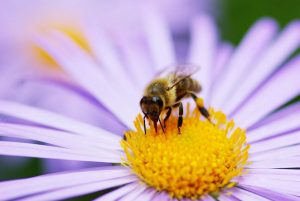 bee-on-flower-pakhnyushchy-shutterstock