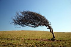 windswept-tree-7678678